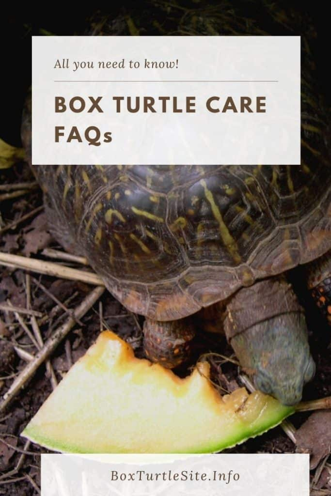 Box turtle care FAQ collection. We have answered several box turtle care questions from our readers. See our answers here.