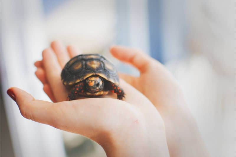 The Best Names for a Pet Turtle