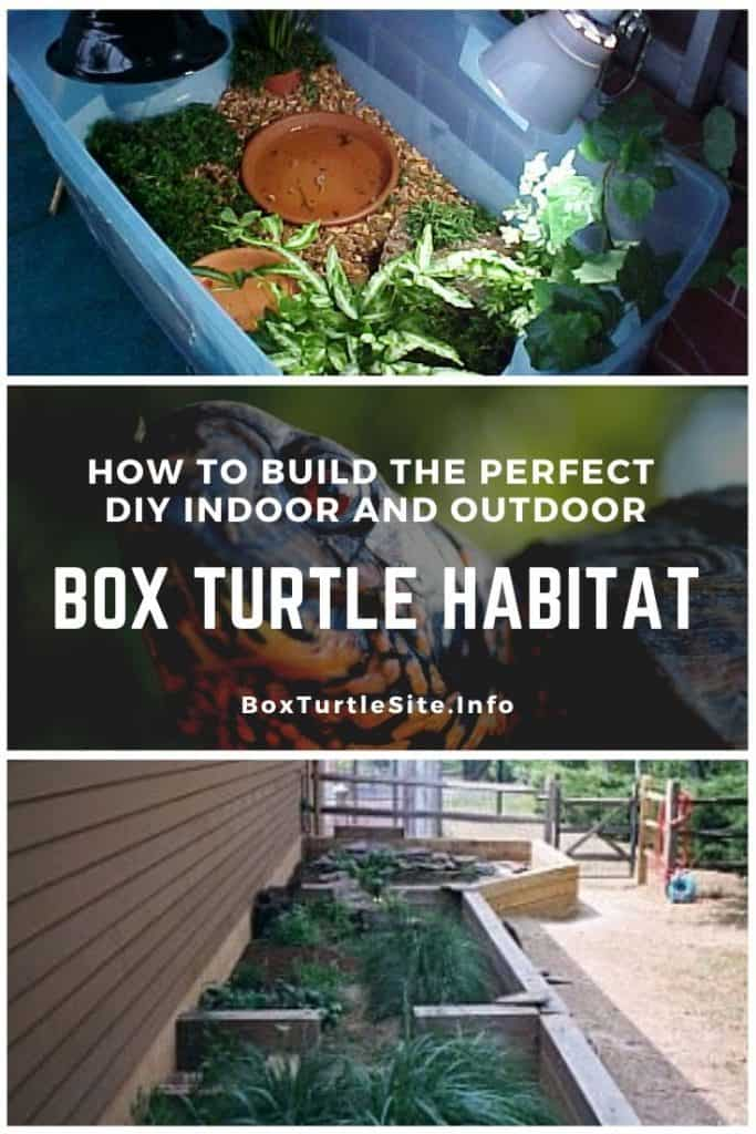 How to build your own DIY box turtle habitat. Instructions to build an indoor box turtle tank and a box turtle habitat outdoor.